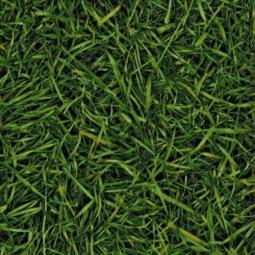 Линолеум IVC Neo Grass 25 3 м рулон